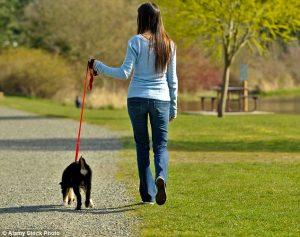 Выгул собак - отличный вариант