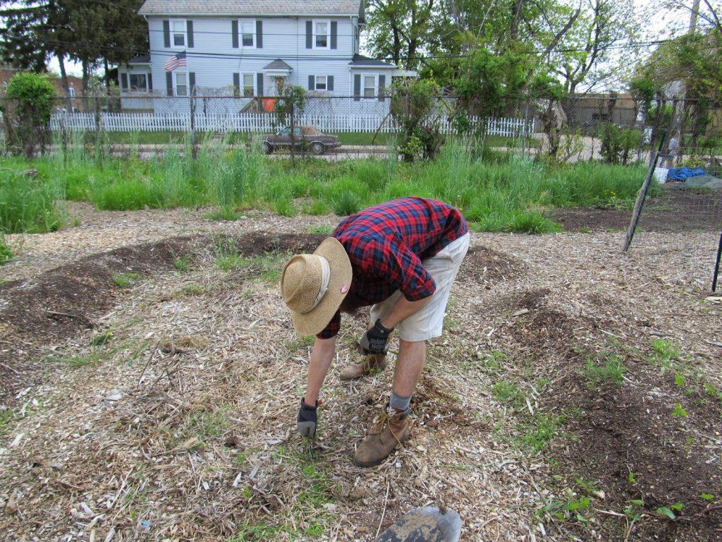 Копка, полив, сбор урожая на огородах
